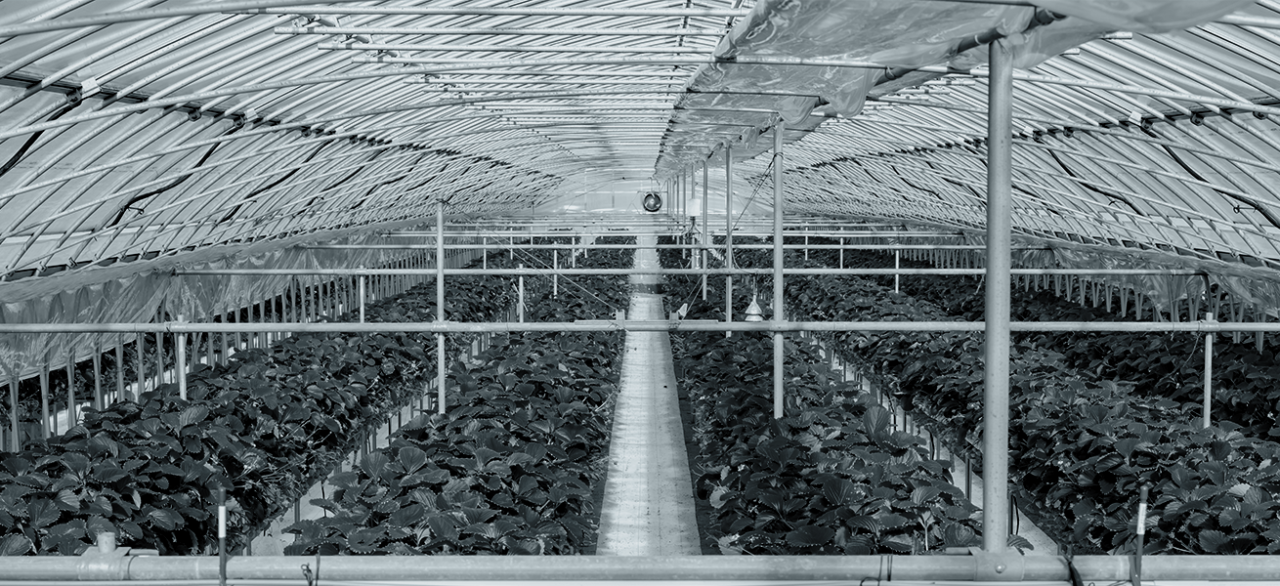 Agriculture / Horticulture <br> Maraîchage